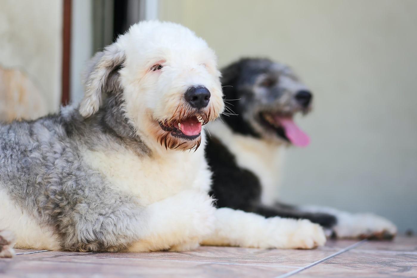 犬の吠え、ダイエットの失敗…三項随伴性を知れば行動の疑問がとける!