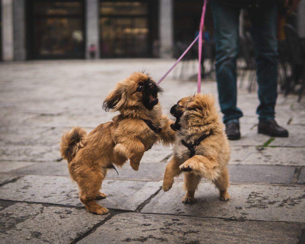 犬の散歩中の喧嘩