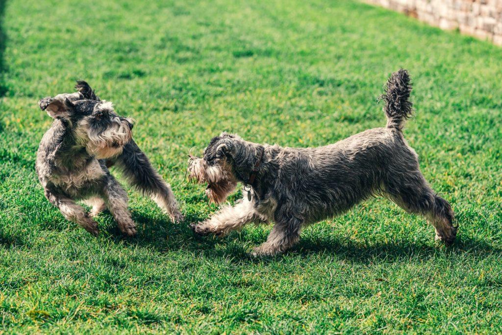 犬の積極性